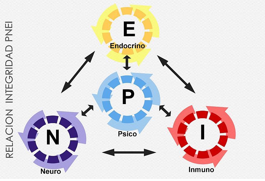 La PsicoNeuroEndocrinoImmunologia (PNEI)