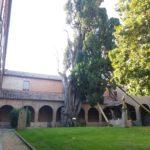 Cipresso di s. Francesco - Villa Verucchio (Rimini)